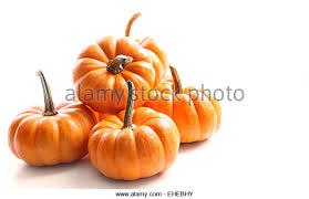 small pumpkins small white pumpkins stock photos small white pumpkins stock