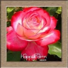 1194 best seeds gardening images on pinterest garden seeds