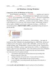 cell membrane coloring worksheet key name key date period cell