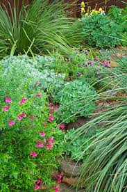 Texas Landscape Plants by North Texas Native Landscaping Dubberley Landscape