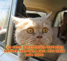 fotos graciosas de hombres borrachos fotos graciosas de gatos borrachos con frases divertidas