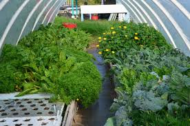 organic commercial aquaponics friendly aquaponics