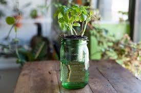 How To Make A Self Watering Planter by How To Create A Diy Self Watering Planter For The Home U2014 Homestead