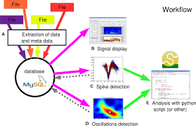 frontiers openelectrophy an electrophysiological data and