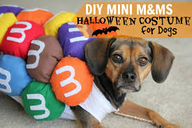 Dogs Halloween Costumes Pictures Diy Mini U0026ms Halloween Costume Dogs
