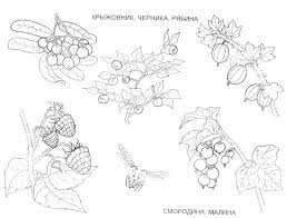 fruit and berries coloring pages 10 fruit and berries kids