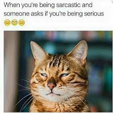 Funny Sarcastic Memes - sarcastic memes