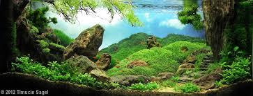 Aquascaping Techniques 31 Best Nano Images On Pinterest Aquarium Ideas Planted