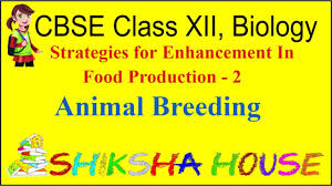 cbse class 12 biology strategies for enhancement in food