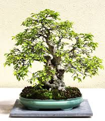 bonsai globetrotting make your own rock a wild u0026 wonderful