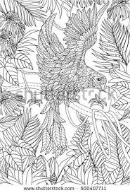 111 best a parrot page images on pinterest parrots colourful