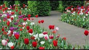 beautiful flower gardens youtube