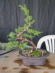 pot bonsai design how to make a juniper bonsai for under 30 00 youtube