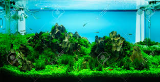 aquascaping images u0026 stock pictures royalty free aquascaping