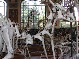 the paris camel is just plain dumb sauropod vertebra picture of