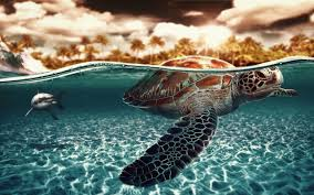 turtle wallpaper download free stunning hd backgrounds for
