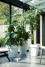 3222 best p lant images on pinterest indoor plants houseplants