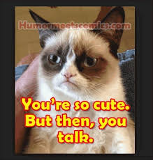 Tard The Cat Meme - 14 hilarious grumpy cat memes that will make you smile