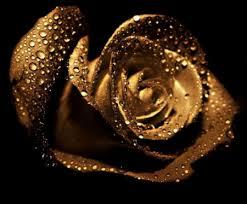 golden roses golden flowers wallpaper id 1294979 desktop nexus nature