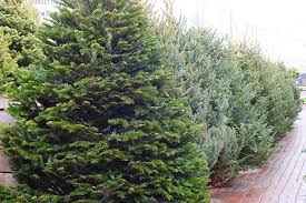 real christmas trees delivered