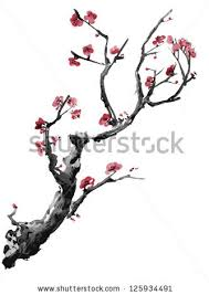 blossom japanese cherry tree stock vector