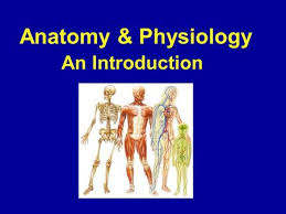 Structure Of Human Anatomy Anatomy U0026 Physiology An Introduction Ppt Download