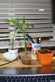 dorm room plants u2013 how to choose plants for your dorm room décor