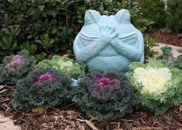 ornamental cabbage kale make excellent winter color mississippi