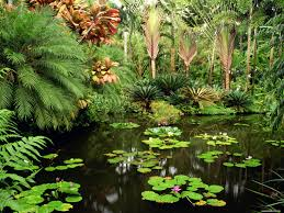 tropical garden flowers green tropics 1600x1200 wallpapers