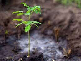 committee sets target for 159m saplings to be