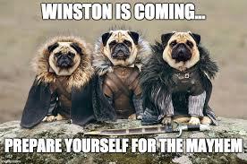 Meme Generator Prepare Yourself - pugs imgflip