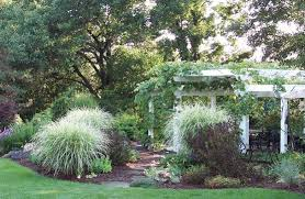 ornamental grass gardening grasses yard ideas and