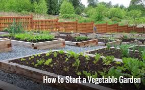great starting vegetable garden starting your family vegetable