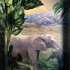 bristol zoo jungle party room flights of fantasy elephant bristol zoo jungle themed seating party room animal wall murals