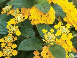 heat loving plants 6 heat tolerant plants you need in your southern garden southern