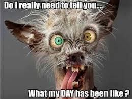 Bad Day At Work Meme - nala bella teaching 5 days left