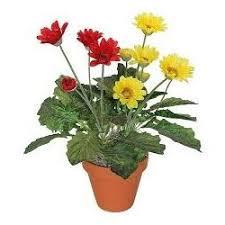 gerbera plant gerbera plant in pune maharashtra manufacturers