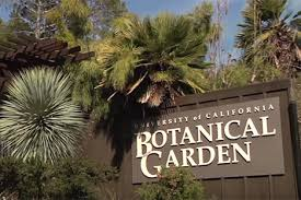Uc Berkeley Botanical Gardens Volunteering Of California Berkeley