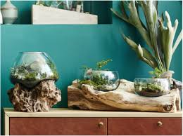 terrariums don u0027t cramp our style big ideas for tiny spaces