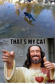 that s my cat by tinkfly meme center