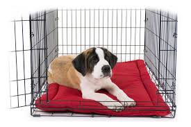 Tough Dog Bed Indestructible Dog Beds Tough Chewproof Dog Beds