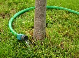 7 tips for watering trees tips