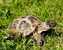 types of pet tortoises how to take care of a turtle
