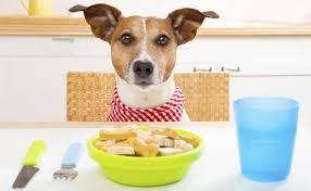 best weight loss dog foods dog food advisor