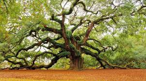 top 25 most and unique trees around the world