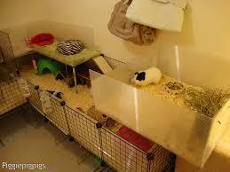 Cages For Guinea Pigs C U0026c Diy Guinea Pig Cages