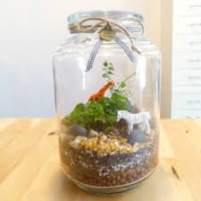 create easy inexpensive terrariums fun for all ages south