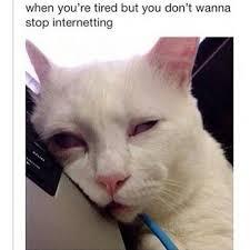 Sleepy Cat Meme - kitty truck meme google search funny quotes memes that i like