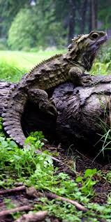 1123 best biology images on pinterest animals lizards and