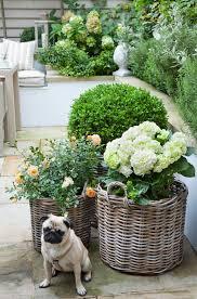 Rosemary Topiary Roses Topiary Hydrangeas Poppy The Pug Flower Pots